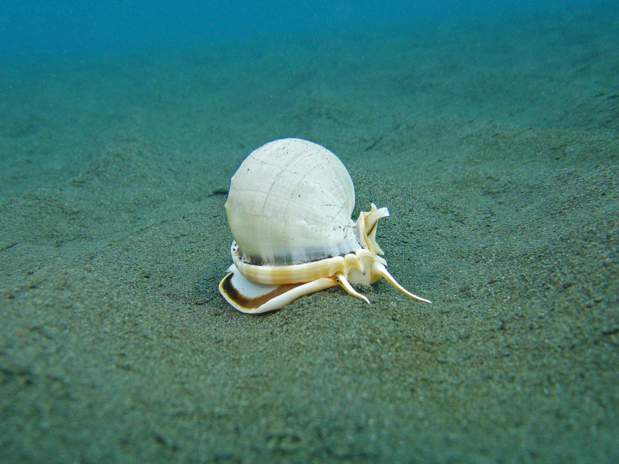 coriew shell.jpg