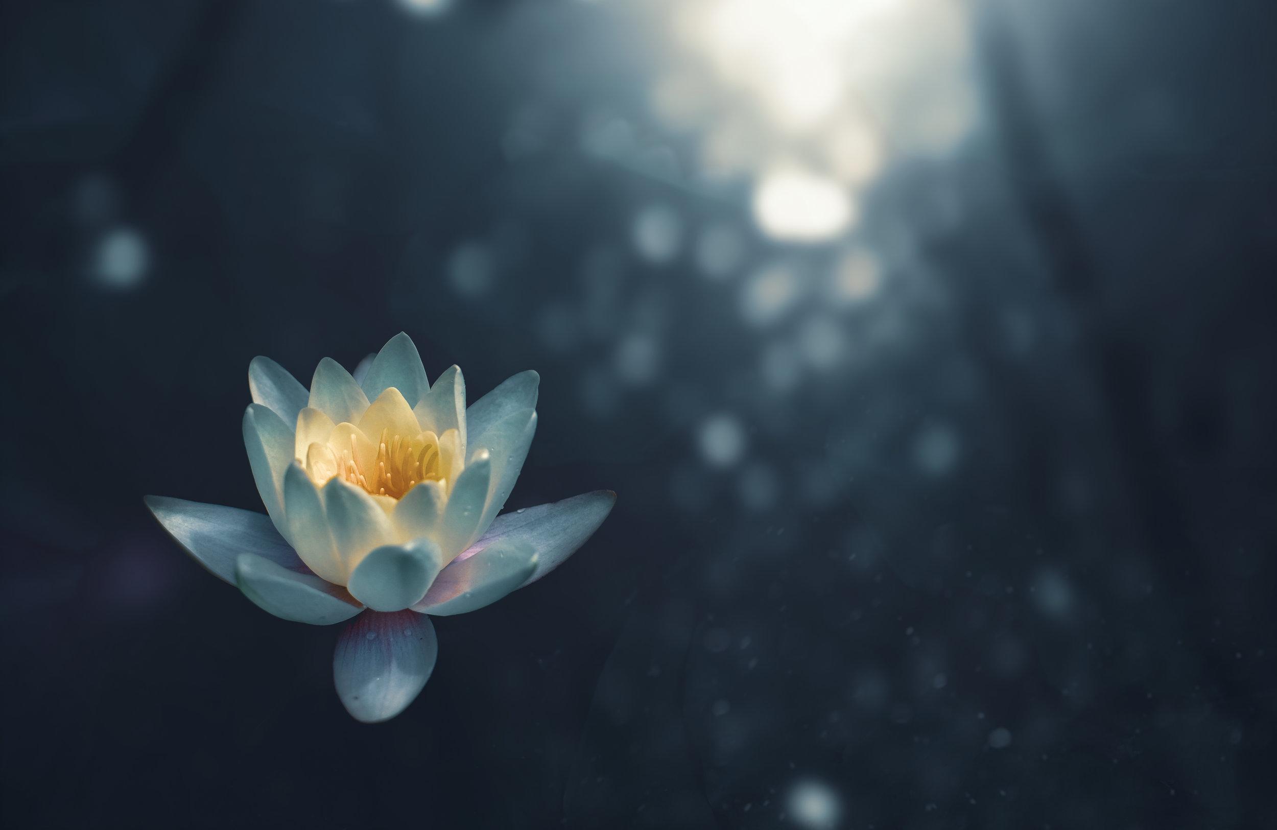tantric-meditation-initiation-kyoto-studiobindu
