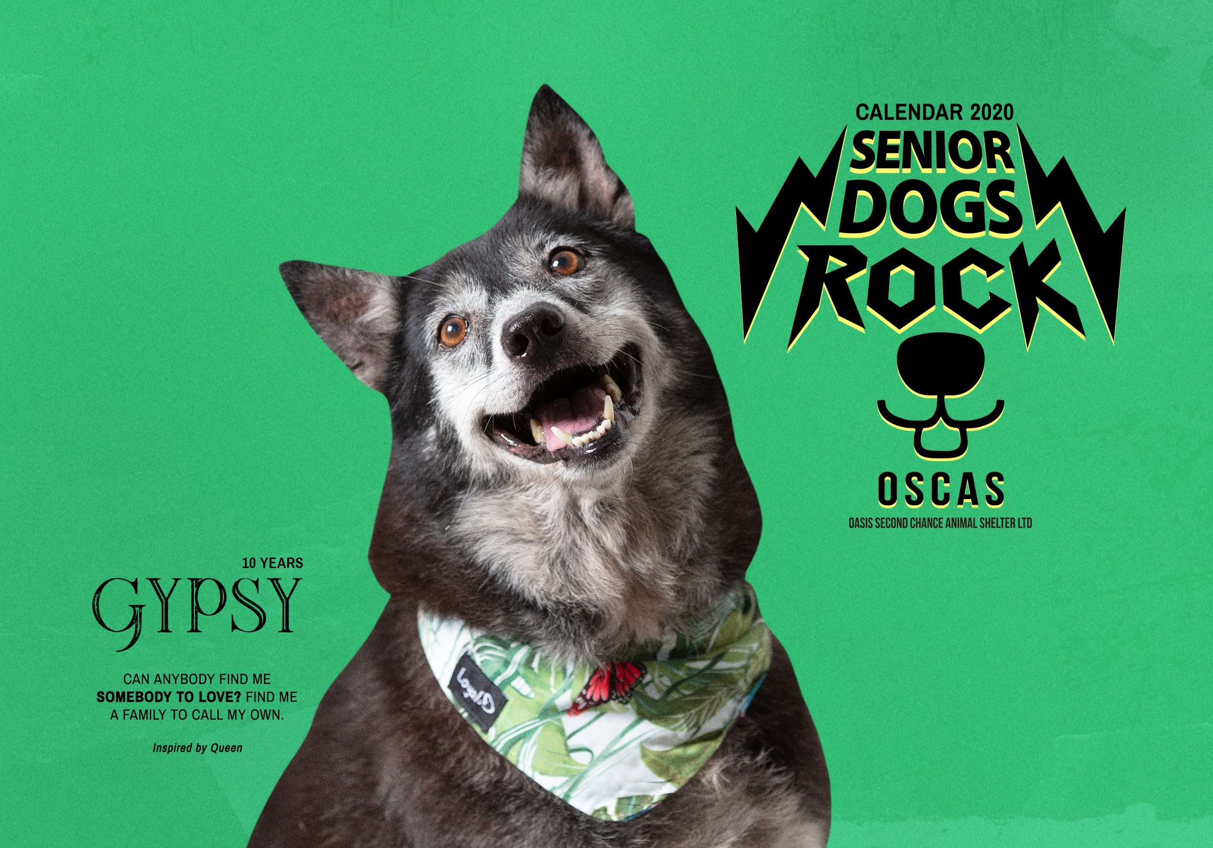 Our beloved Gypsy is the 2020 calendar (album) cover girl!