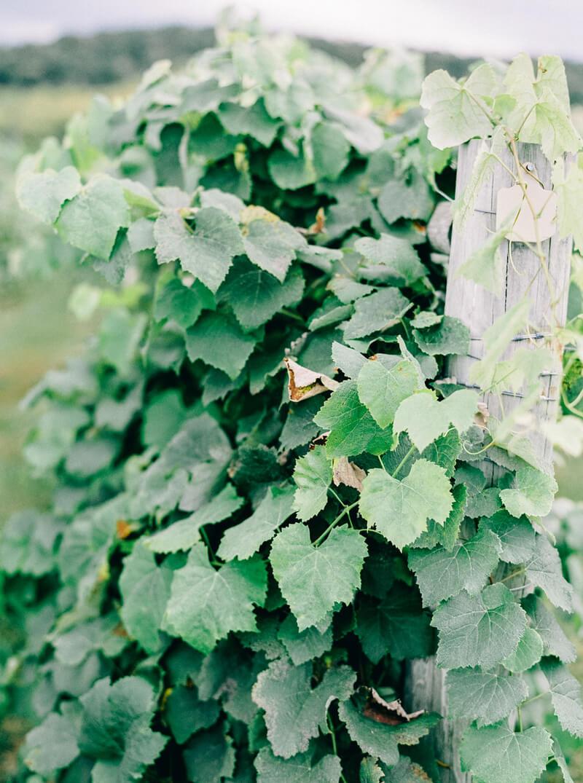 bluestone-vineyard-wedding-bridgewater-va-9.jpg