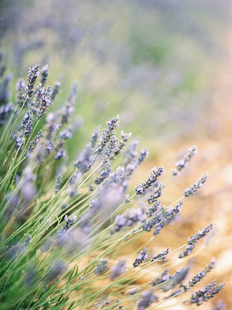 fine-art-lavender-fields-wedding-inspiration-2.jpg