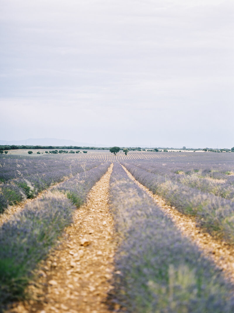 fine-art-lavender-fields-wedding-inspiration-8.jpg