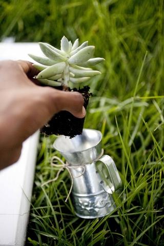 eco-friendly-do-it-yourself-succulent-wedding-favor-7.jpg