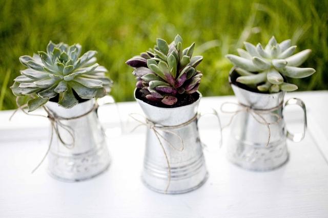 eco-friendly-do-it-yourself-succulent-wedding-favor-9.jpg