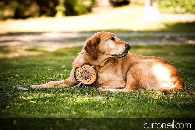 dog-with-wood-sign.jpg