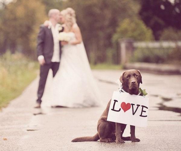 ring-bearer-dog-with-wedding-love-sign.jpg