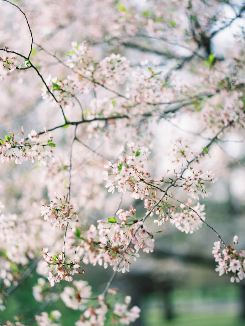 ethereal-blossom-bridal-portraits-fine-art-film-17.jpg