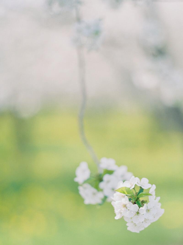 cherry-blossom-wedding-shoot-fine-art-film-10.jpg