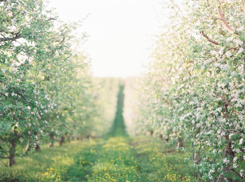 cherry-blossom-wedding-shoot-fine-art-film-16.jpg