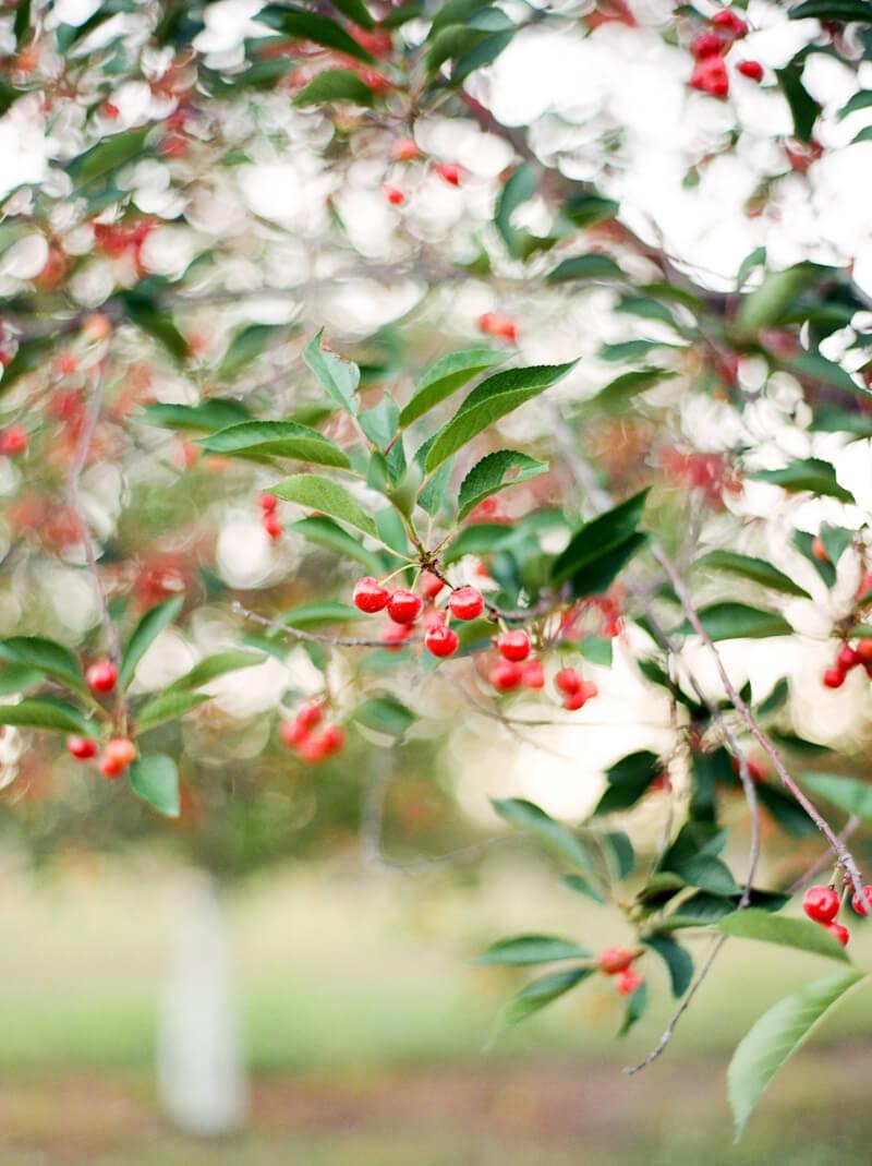 cherry-basket-farm-wedding-photos-25.jpg