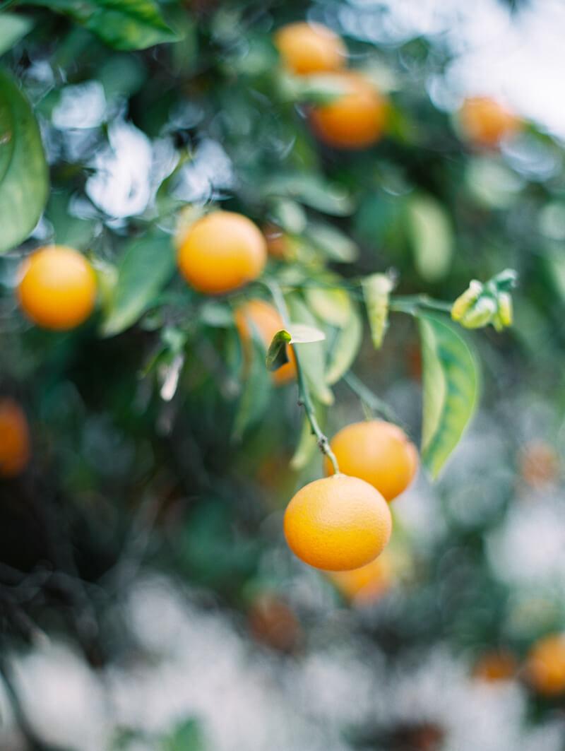 orange-county-engagement-photos-29.jpg
