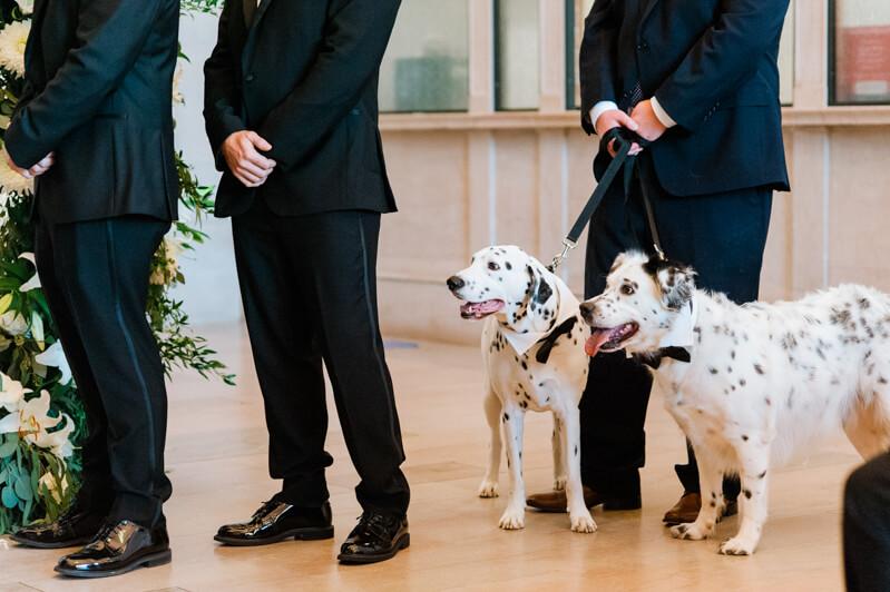 macon-georgia-wedding-photos.jpg