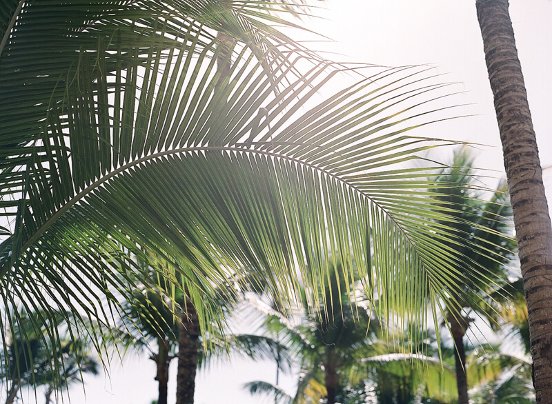 tropical-fine-art-wedding-6.jpg