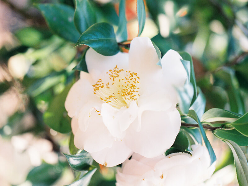 garden-bridal-inspiration.jpg