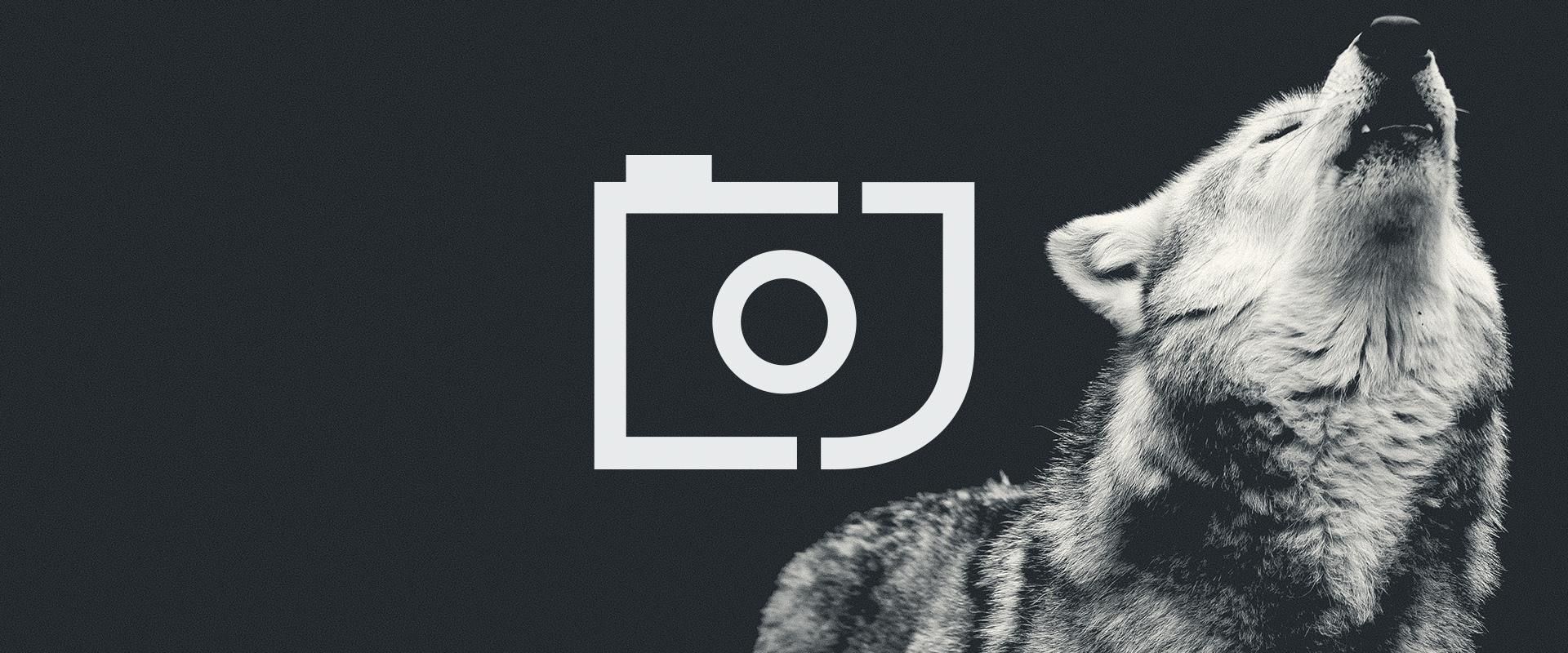 jackal2.jpg