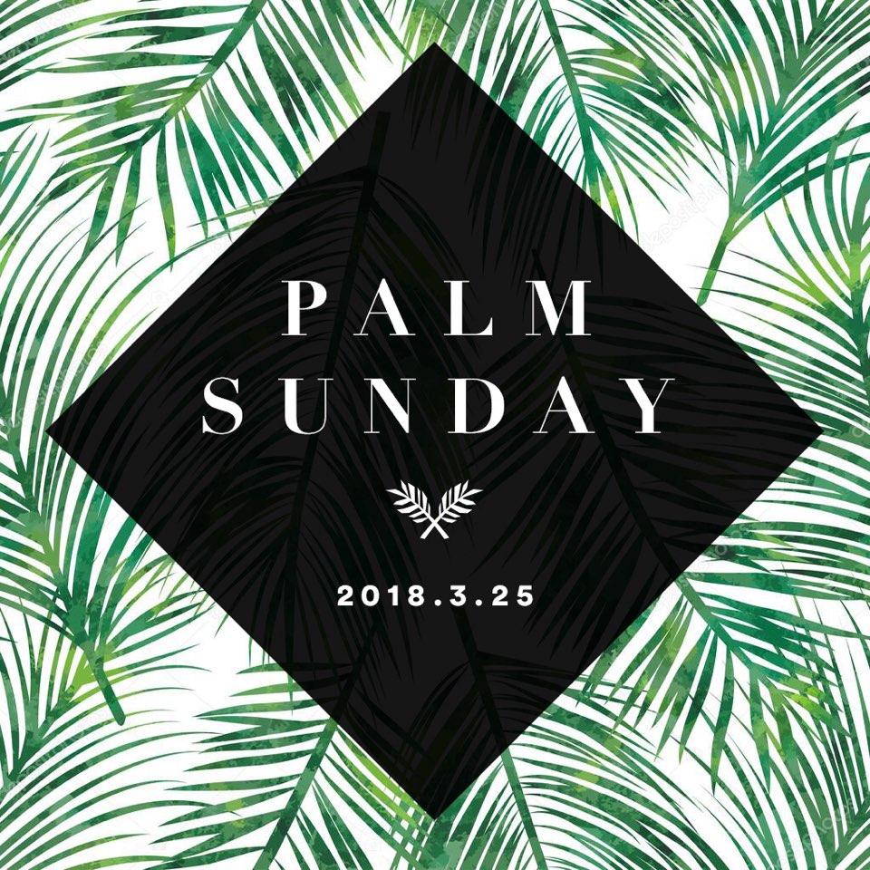 palm Sudnay.jpeg