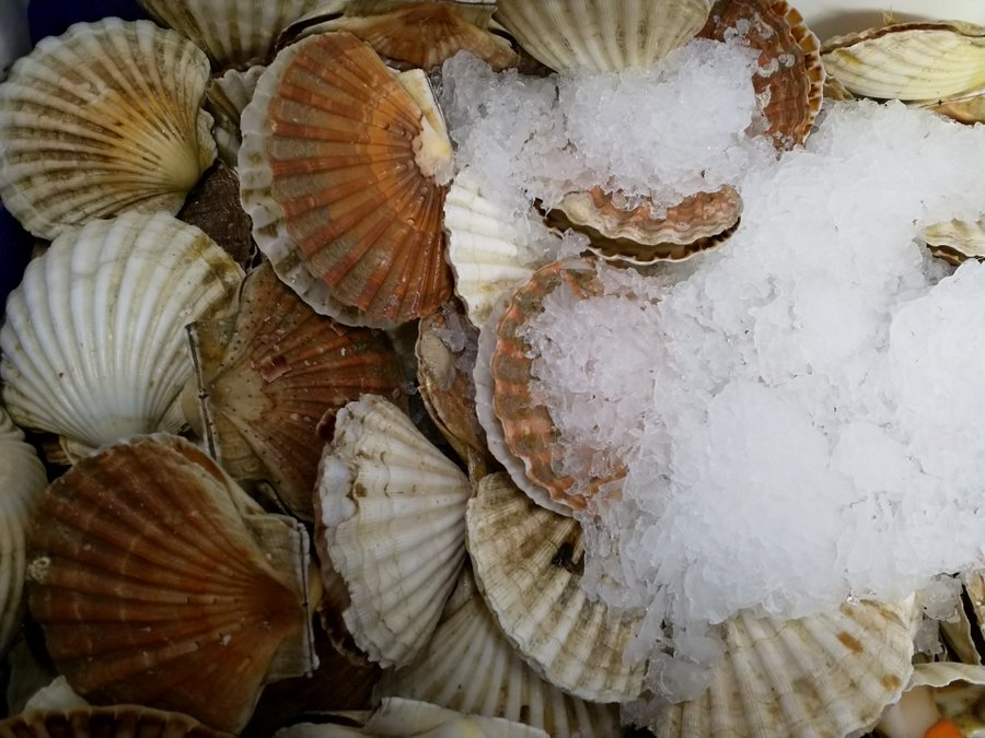 MCB SEAFOOD - From local Newhaven, East Sussex, MCB Seafood sources fresh seafood, fish and shellfish of all types. They also buy from local fishermen & sell their seafood all over the world - fresh, dried, smoked & preserved, as well as appear on menus of local restaurants and pubs.