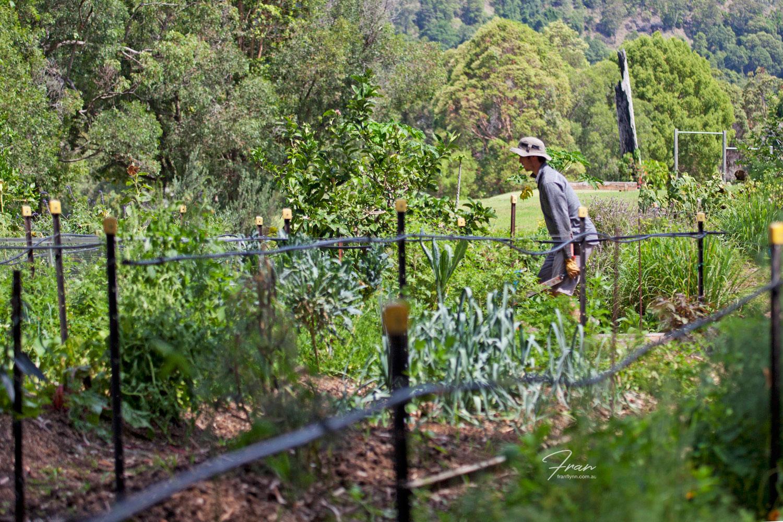 gwinaganna-lifestyle-farm.jpg