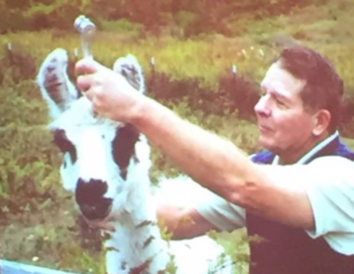 Dr. John Beaulieu, author of Human Tuning and one of Melissa Zollo's sound teachers, gives a tuning fork session to his llama.