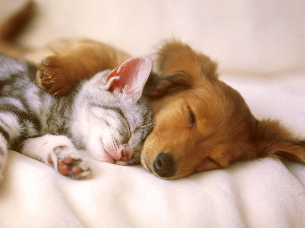 cute-pets-20730-21267-hd-wallpapers.jpg