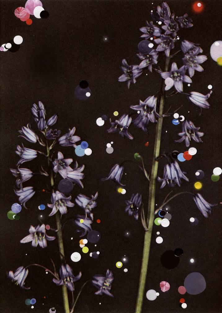 Sebastiaan Bremer Bloemen: Scilla Campanulata, 2015 Archival inkject print