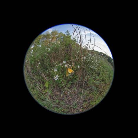 Edward Fausty Worlds #6652, 2014 Digital pigment photograph