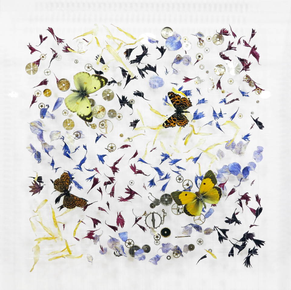 Anna Masters Little Dreams XVII, 2018 Butterflies, dried flowers, watch parts, thread, and pins