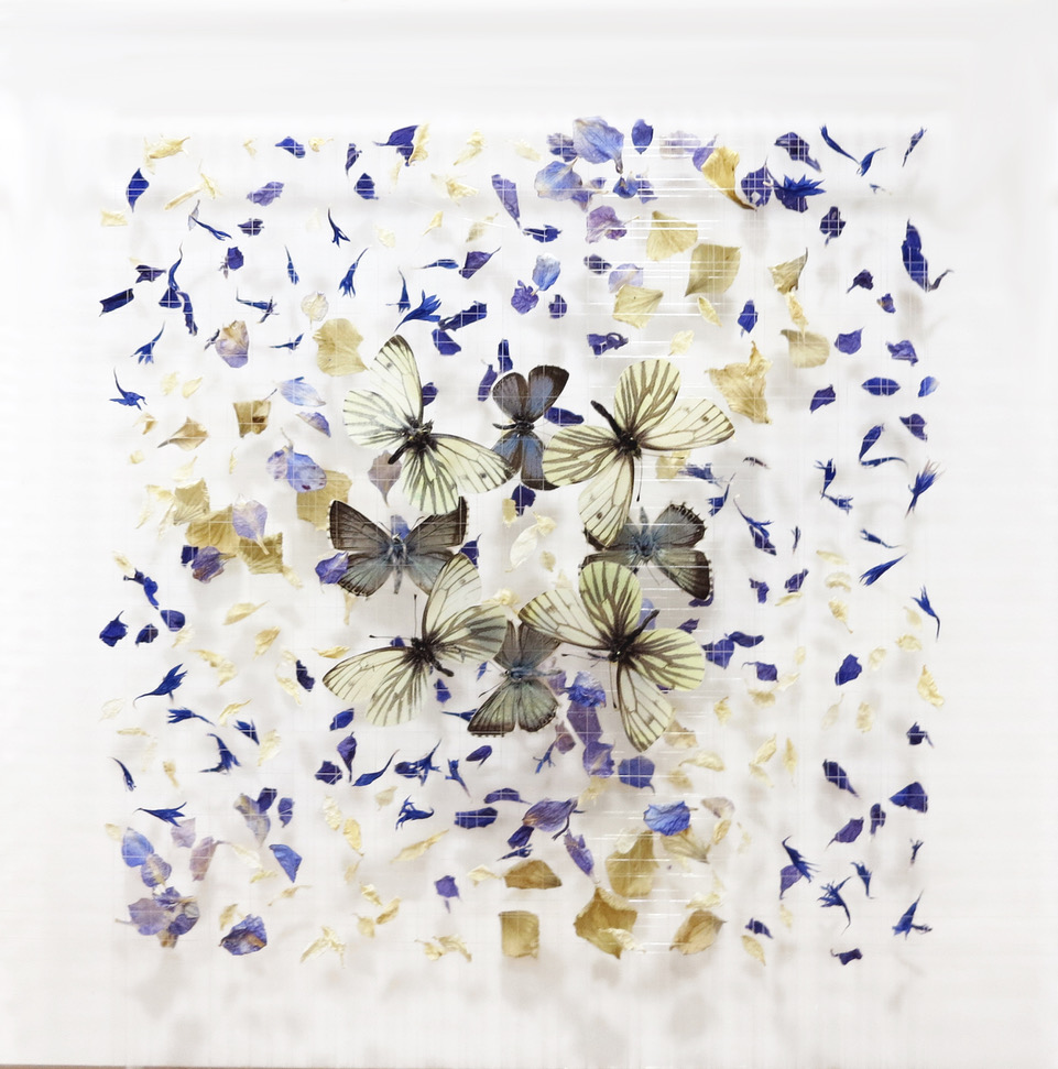 Anna Masters Little Dreams XX, 2018 utterflies, dried flowers, watch parts, thread, and pins