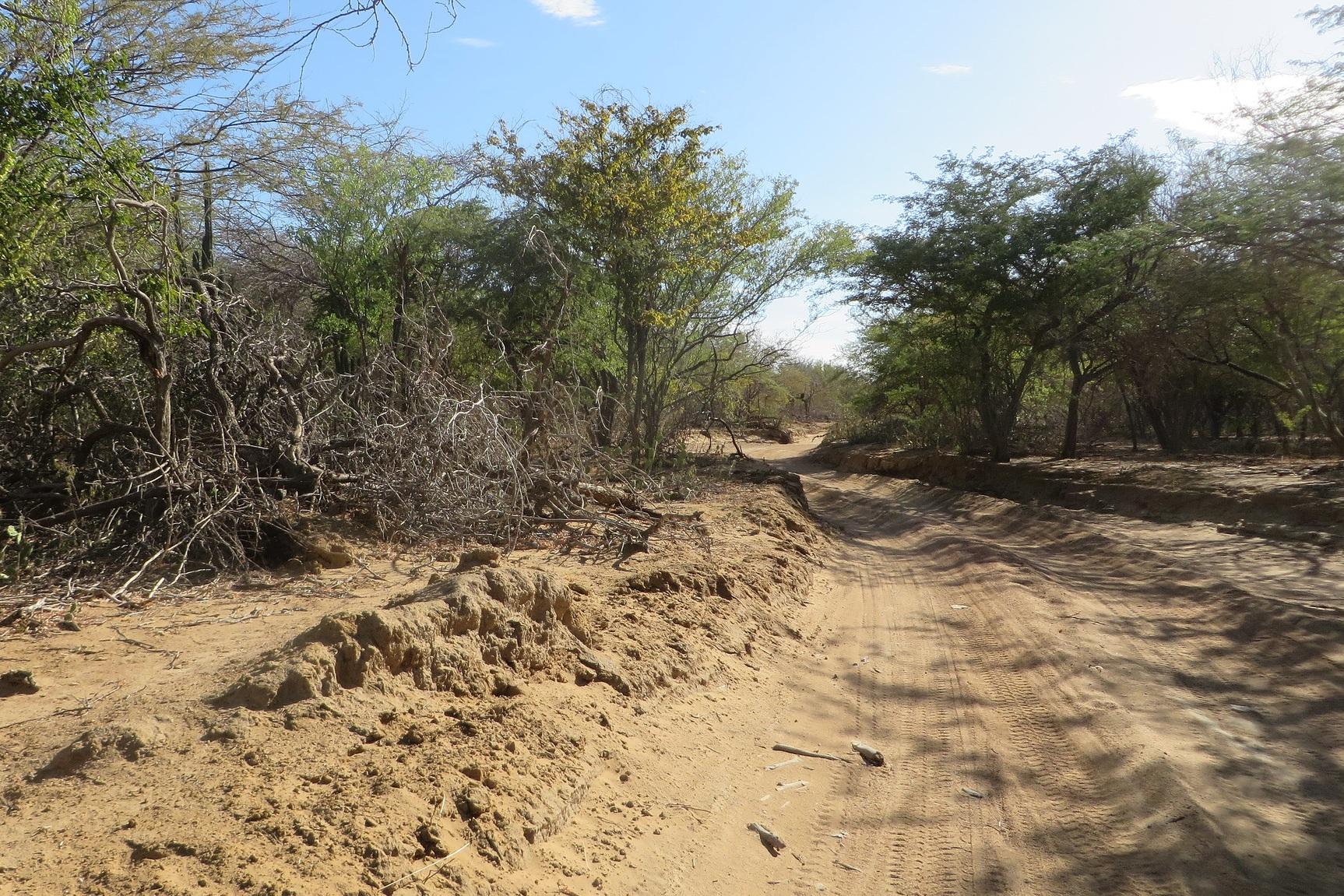 Shrubs and dry terrain, La Guajira, Colombia