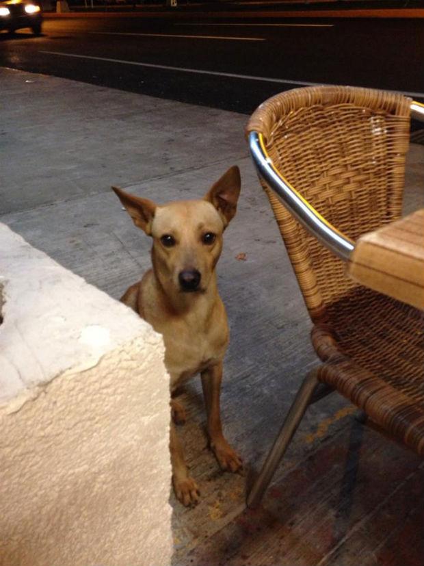street-dog-blog.jpg