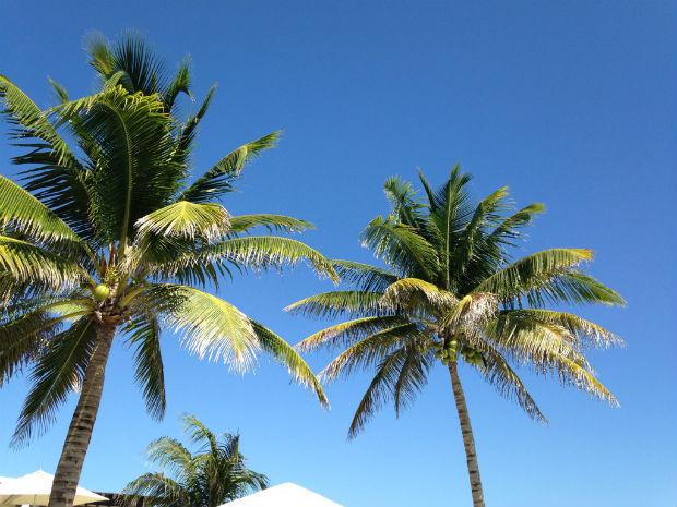 Palm trees Puerto Morelos
