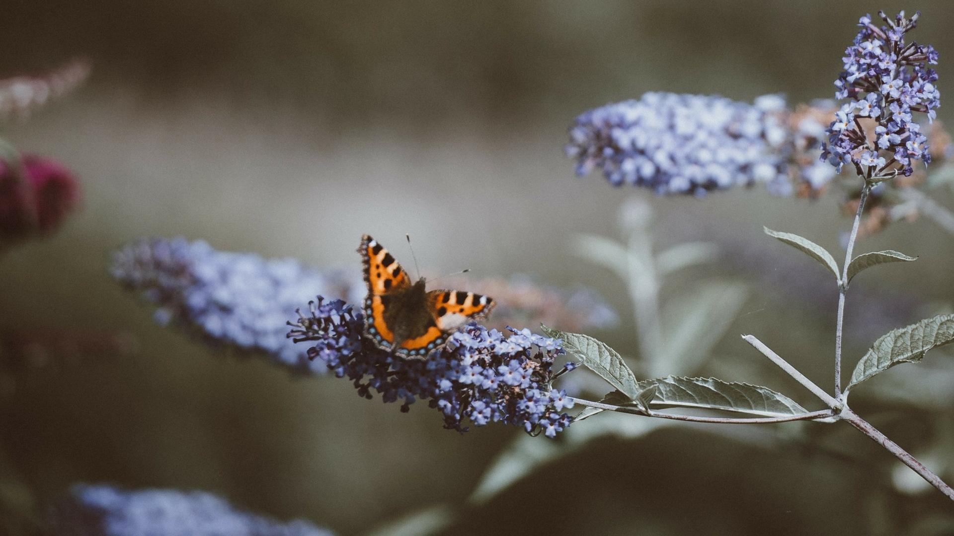 banner-butterfly.jpg