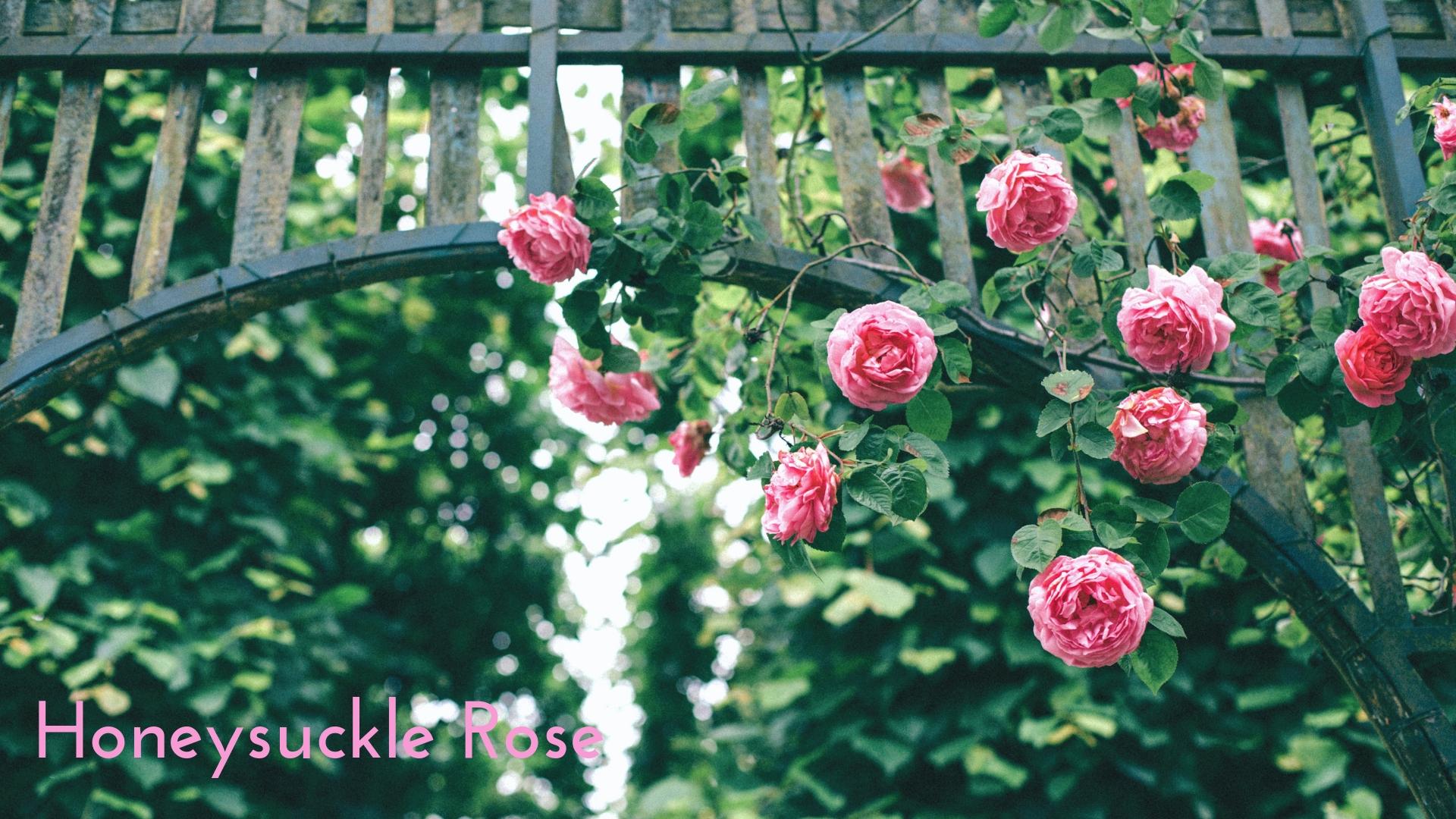 banner-standards-to-love-roses-01.jpg