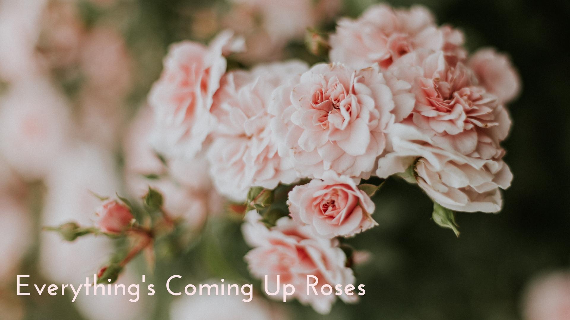 banner-standards-to-love-roses-03.jpg