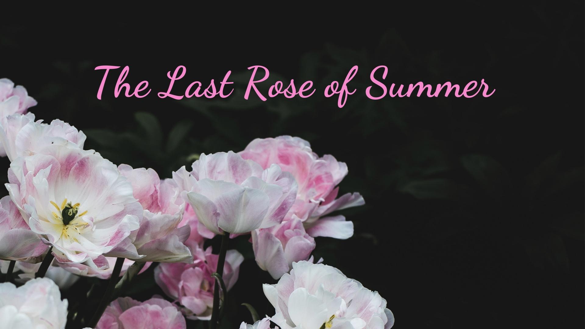 banner-the-last-rose-of-summer-02.jpg