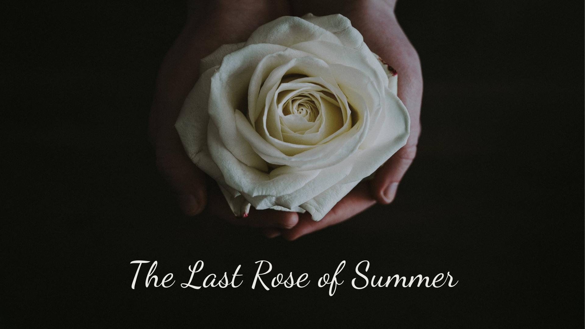 banner-the-last-rose-of-summer-01.jpg