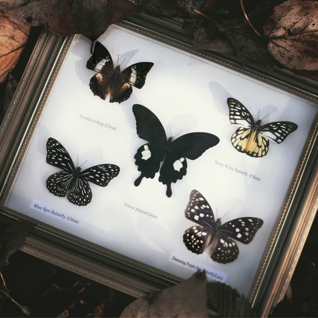 banner-butterfly-nets-and-world-wanderers-03.jpg