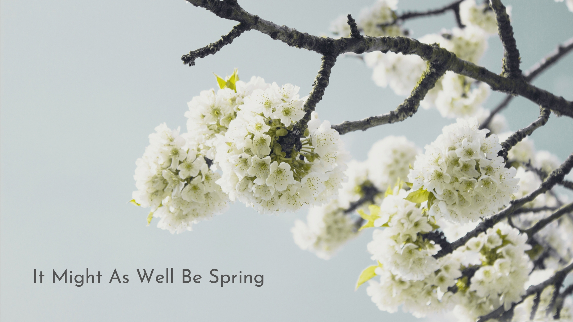 banner-standards-to-love-springtime-in-my-heart-04.jpg