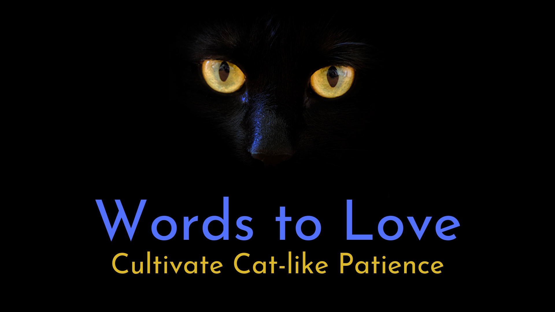 banner-words-to-love-cultivate-catlike-patience-01.jpg