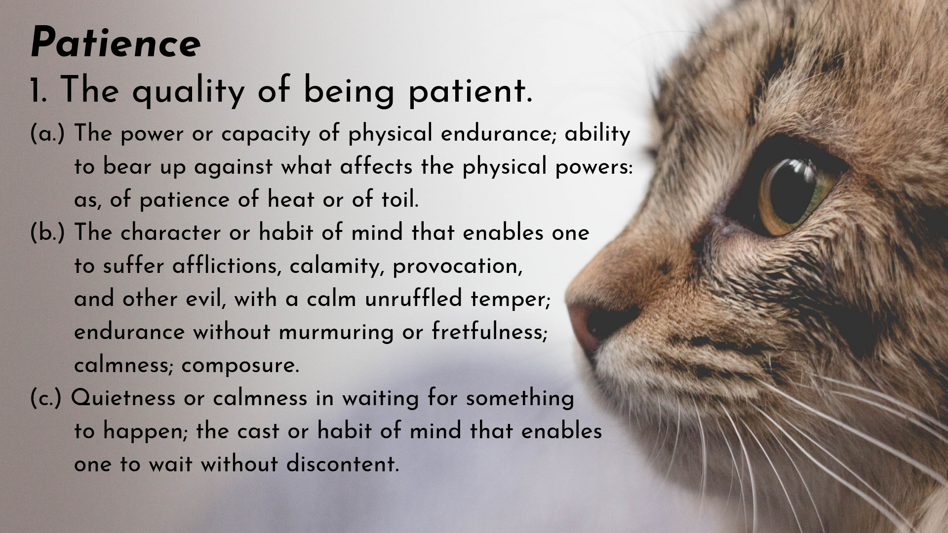 banner-words-to-love-cultivate-catlike-patience-02.jpg