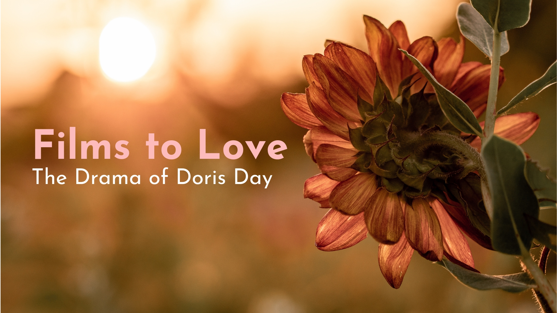 banner-films-to-love-the-drama-of-doris-day-01.jpg