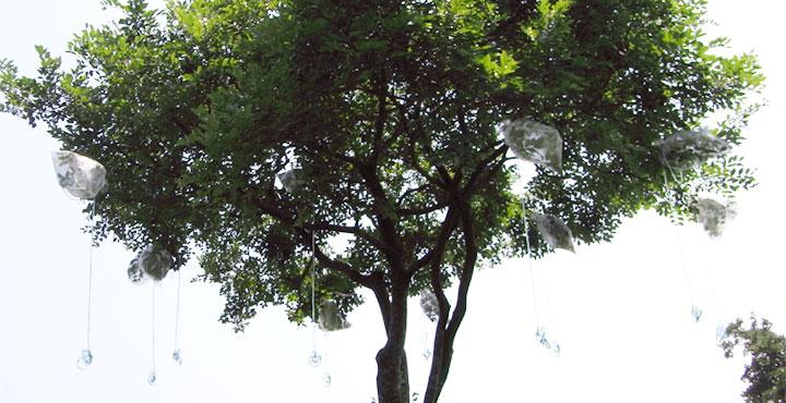art_photosynthesis_1.jpg