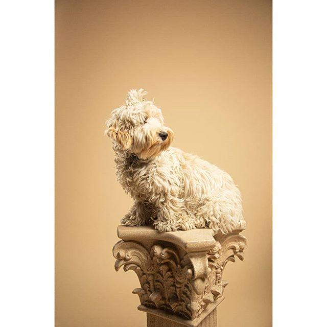 #GoodBoisofInstagram  # dogs #dogsofinstagram #dog #puppy studio #studiolighting #shoot #studioshoot