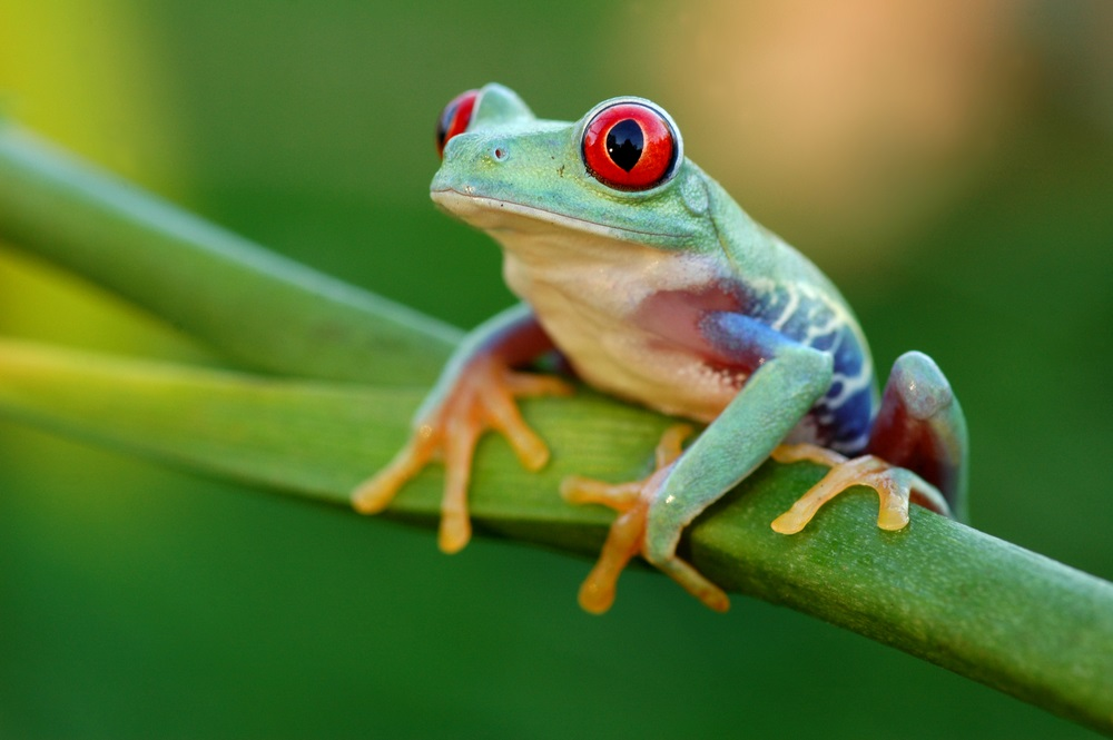 image-frog.jpg