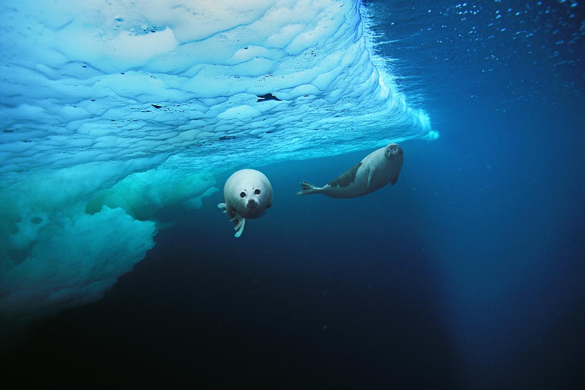 seal ice.jpg