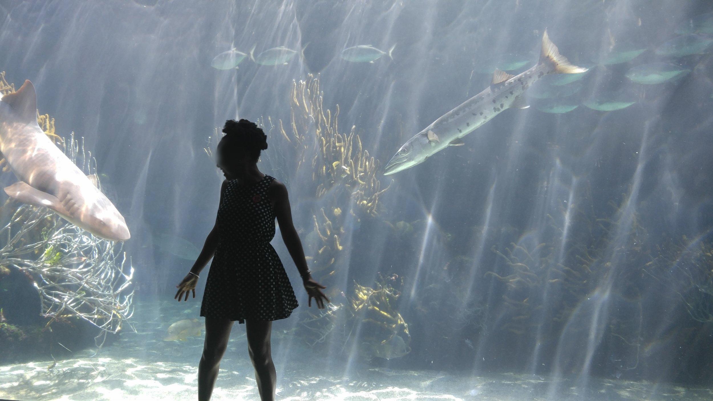 Olivia Cabot aquarium.jpg