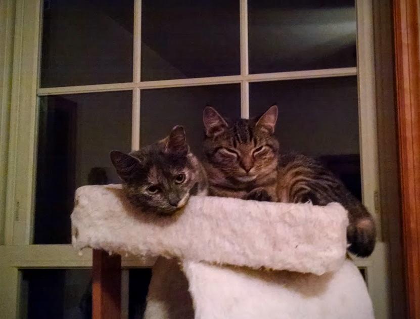 Millie & Bucky