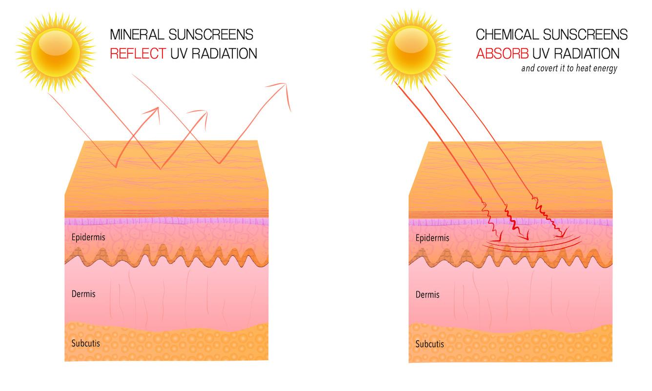HARKEN DERM MINERAL VS CHEMICAL sunscreens white background.jpg