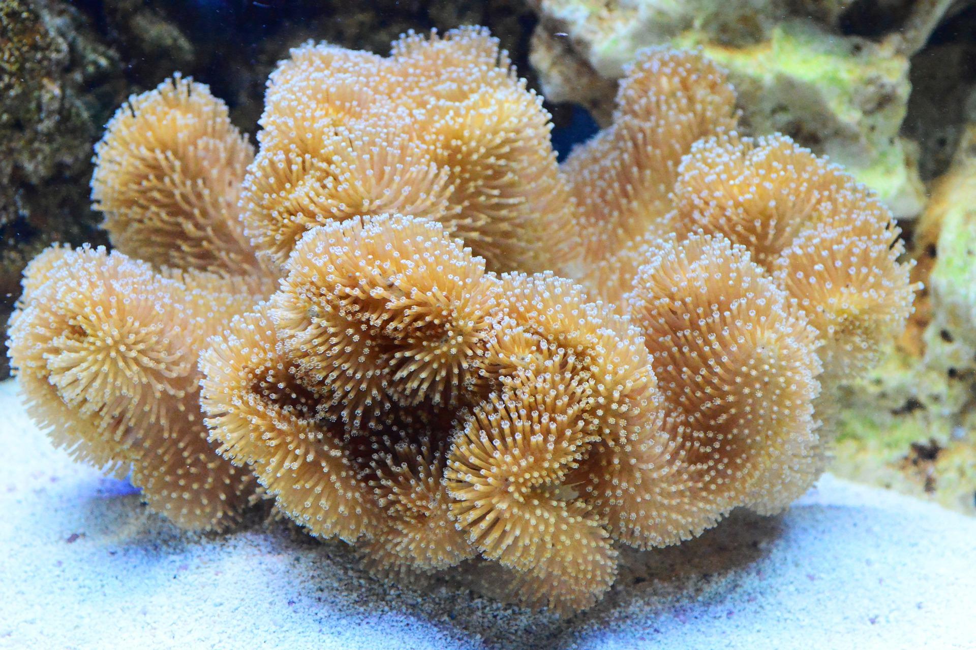 aquarium-pollydot-hard-leather-cora.jpg