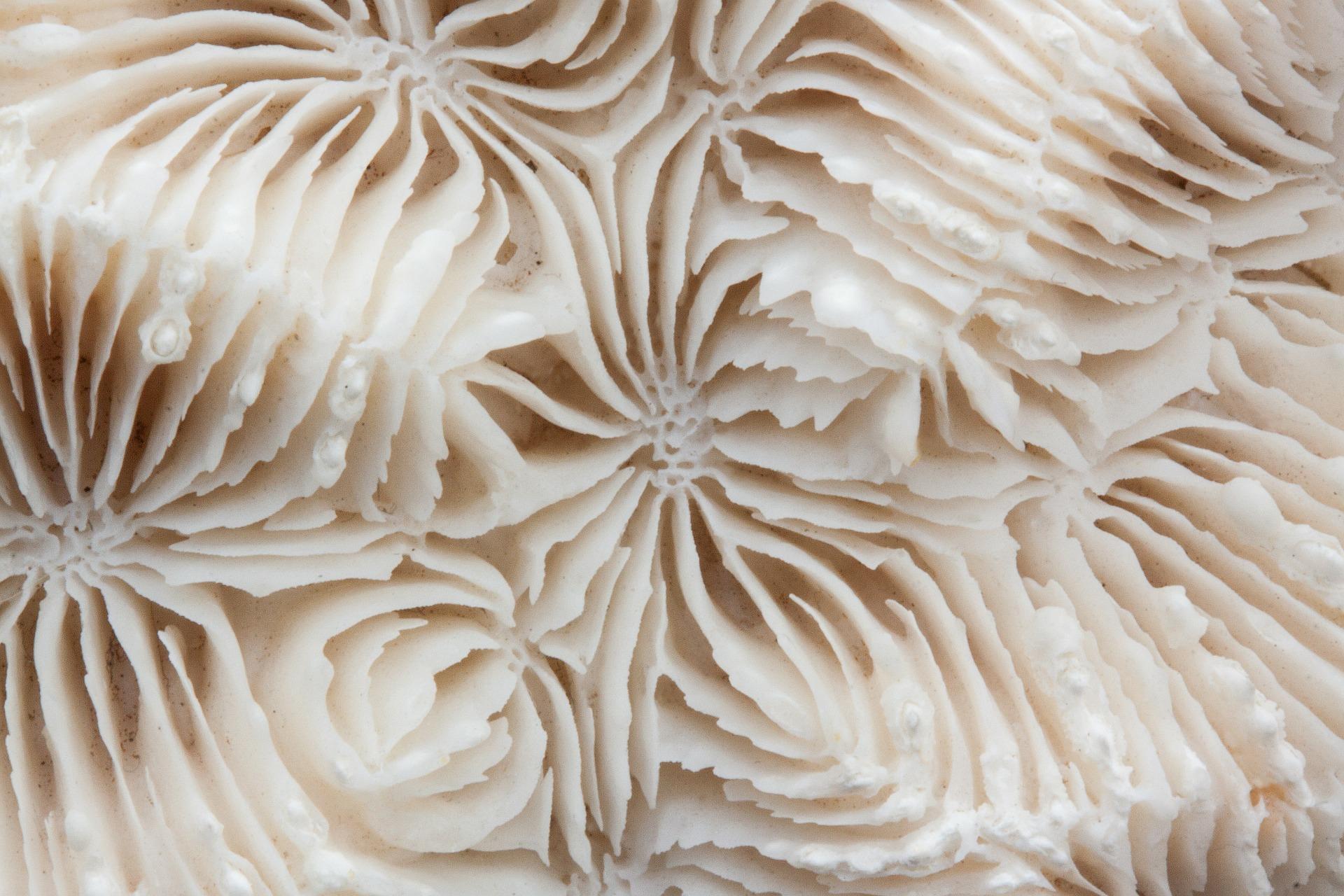 brain-coral-stux.jpg